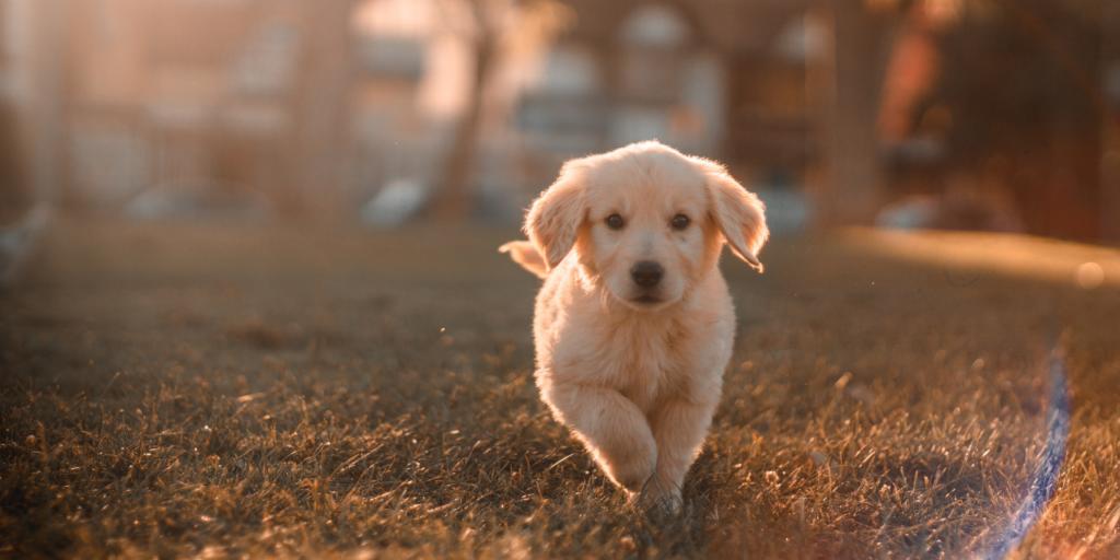 PPL maltraitance animale : bilan de l'examen au sénat