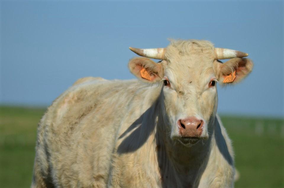 Relance : le gouvernement approuve 18 mesures portées par CAP pour les ONG de protection animale